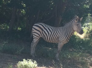 From zebra to wildebeast to giraffe, they saw the wild animals of their country and these memories will live in their hearts and minds forever! 